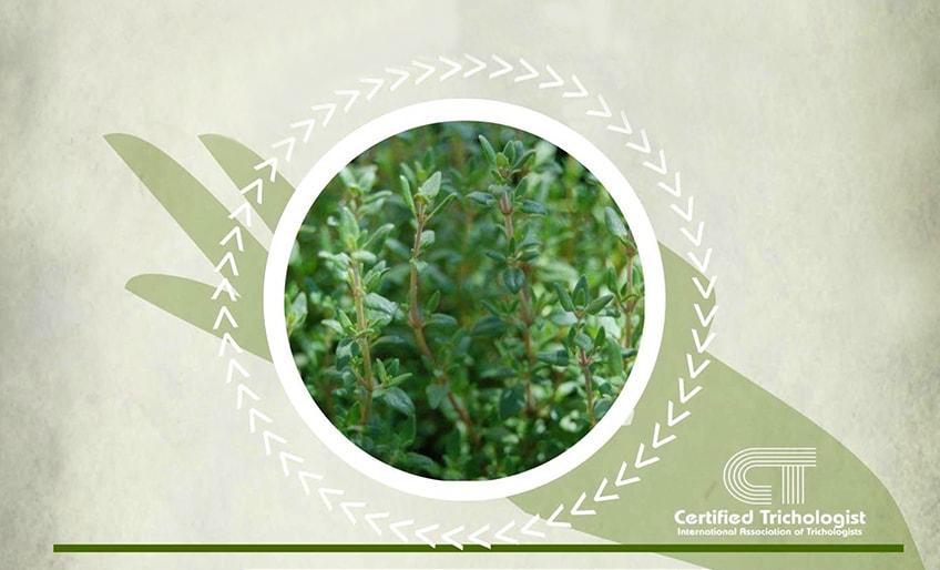 Herbs 4hair for Thyme