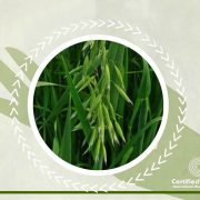 oat-straw