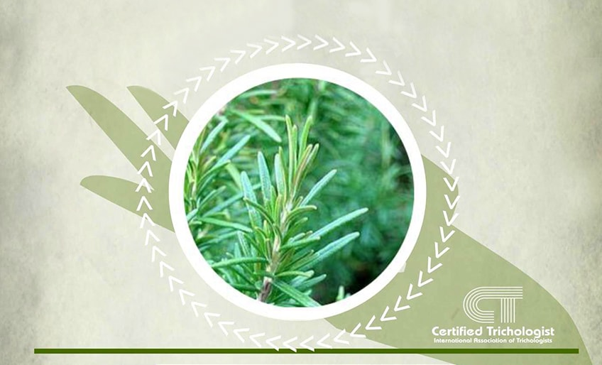 Herbs 4hair for Rosemary